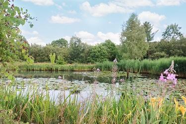 Aussicht auf den Teich
