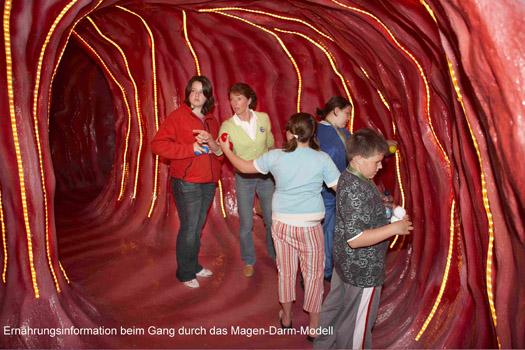 Magen-Darm-Modell